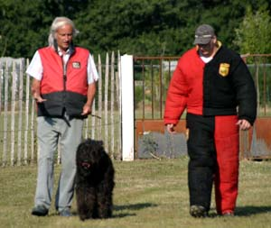 Canine Club Bouviers des Flandres and Co - COPYRIGHT DEPOSE